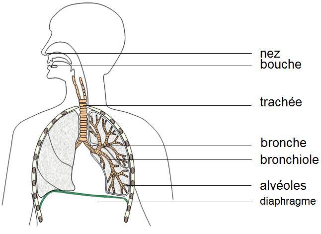 Trajet-dioxygène