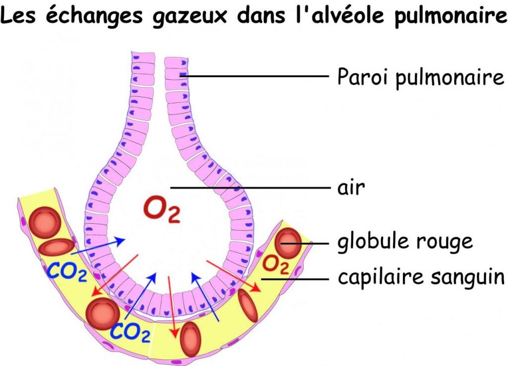 echange-alveole