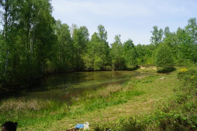 Une des mares du site