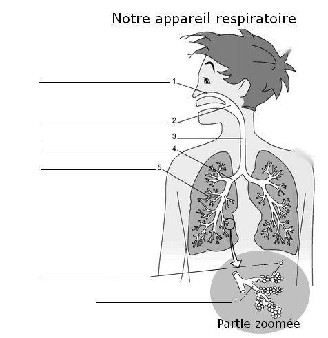 schema_appareil_respiratoire